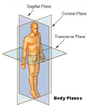 diagram of the various planes of the human body