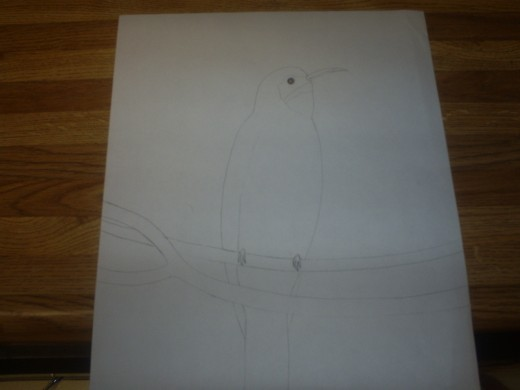 I sketched out a picture of a bird. Copyright Sweetiepie.