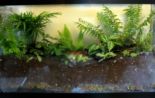 Rainforest Terrarium - 10 Gallon Glass Tank