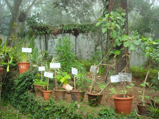 Botanical Garden, Yercaud with many rare plant species.