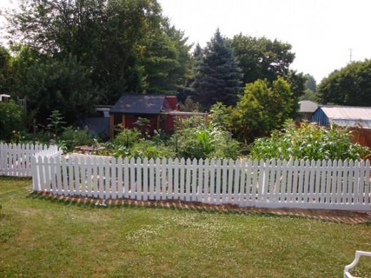 Our back yard garden