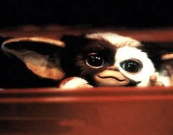 GIZMO, The CUTEST Creature EvEr! Thankyou Gremlins!