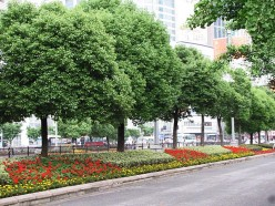Lovely well maintained street foliage