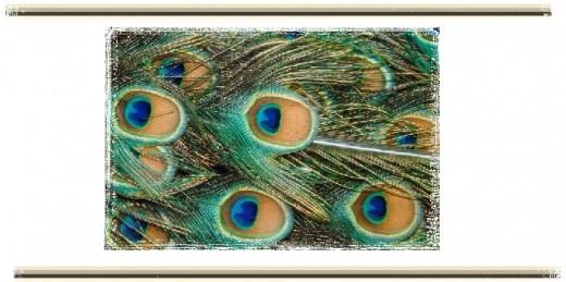modern peacock invitation