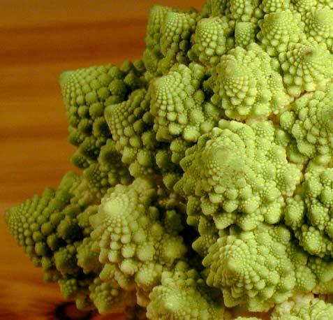 Broccoli Fractal