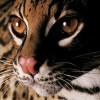 brighthope profile image