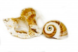 Seashells are only one of the things collected from Out of the Ocean.