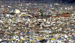 As you can seem there is a man paddling a canoe in a sea of plastic refuse. In the Pacific Ocean, there are vast regions like this, trapped inside huge whorls of oceanic currents.