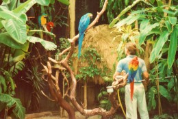 Inside the Bloedel Conservatory
