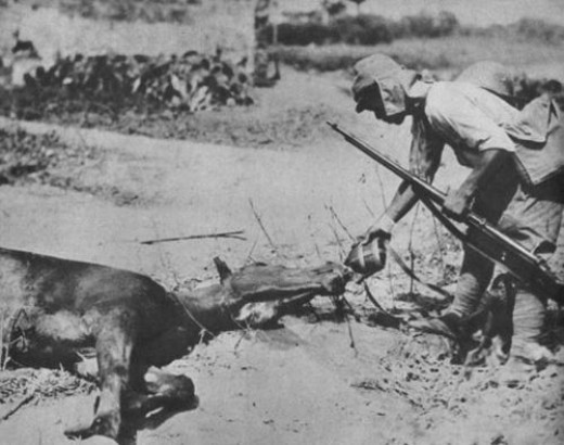 A remarkable picture of showing compassion to animals. - Japanese soldier gives his canteen to a dying horse