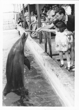 The writer encouraging his daughter to feed the porpoises.  Coolangatta, Queesland, Aust 1960s