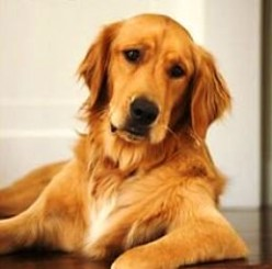 Dog Arthritis - How to Help Dogs with Joint Problems