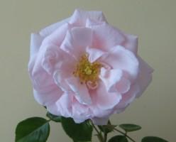 http://s4.hubimg.com/u/3446419_f248.jpg