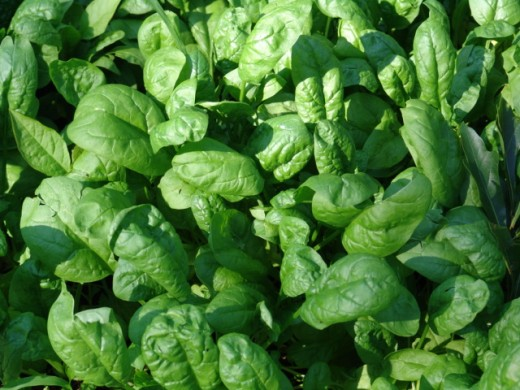 Foods to avoid during kidney stones - spinach high in oxalate