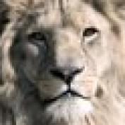 Strautter profile image