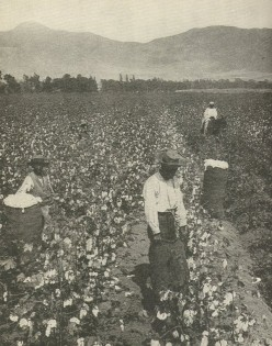 Cotton was king and rice was cash