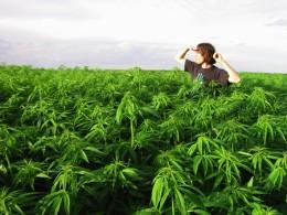Source: http://www.treehugger.com/legalize-marijuana-california-environment.jpg