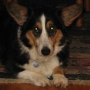 Stella Here profile image