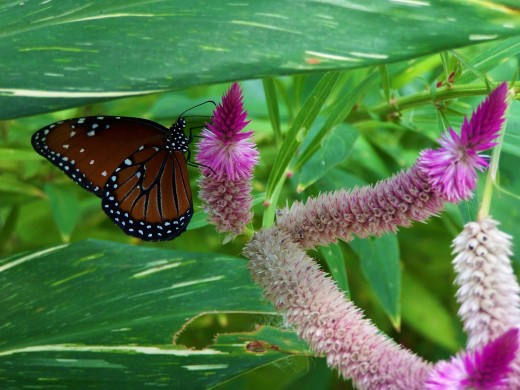 lovely purple flowers with adult butterfly resting
