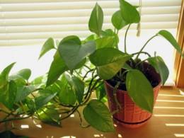 Avoid Poisonous Houseplants