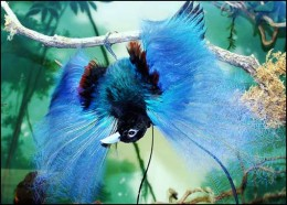 a bird of paradise