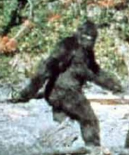 Bigfoot is a rare sight in Northern California these days.
