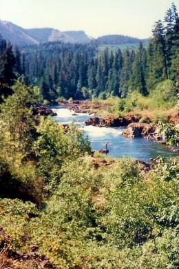 Forested areas near Roseburg and the Umpqua River