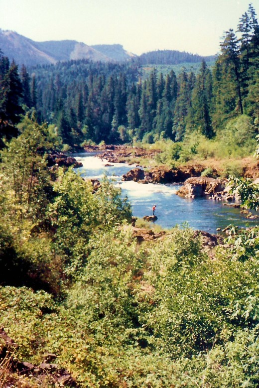 Forested areas near Roseburg with the Umpqua River - Notice the fisherman.