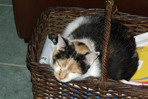 Baskets Of Love