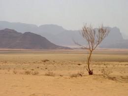 Dry Wadi, Jordan