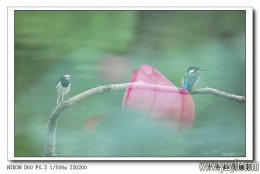 A beautiful kingfisher...