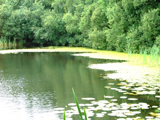 This lake is viewed from a purposefully constructed platform.Photograph by D.A.L.