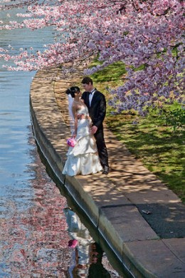 Beautiful Cherry Blossom Wedding. Image Courtesy of Flickr's spettacolopuro