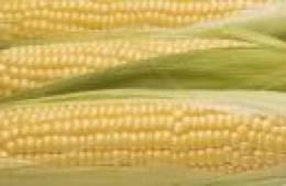 But corn isn't new!