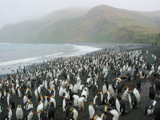 Here are just some of them.  The King Penguin rookery at Lusitania Bay