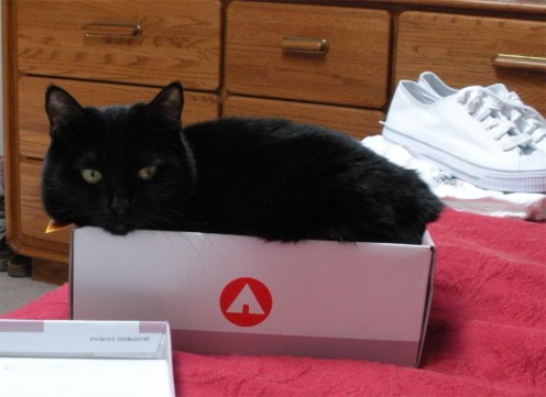 "Soot says, ""See? I knew I'd fit in this box!"""