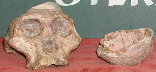 "The fossil nick-named ""Mrs Ples"" who was actually more likely to have been ""Mr Ples"" is about 3.15 million years old an was discovered in the Sterkfontein Caves in 1947 by Dr Robert Broom"