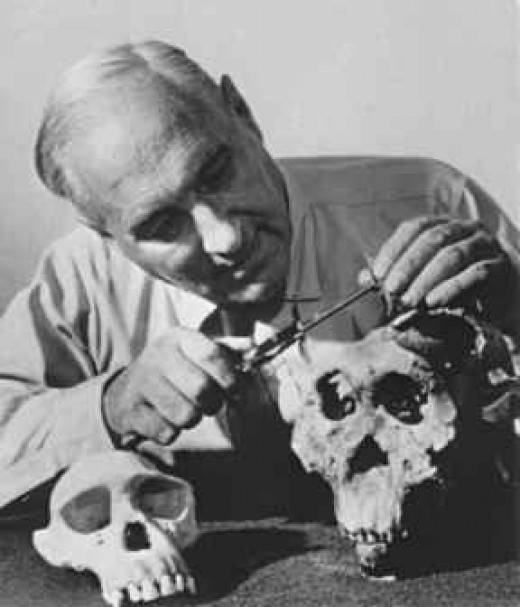 Louis Leakey - Examining Skulls From Olduvai Gorge. Finding The Origin of Man and Mans Evolutionary Development. A Bible, A Cross and Charles Darwin's Theories Is All He Needed. Image Credit: Wikipedia Commons, http://www.doi.gov/disclaimer.html