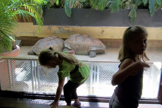The girls were impressed by the size of the giant tortioses.