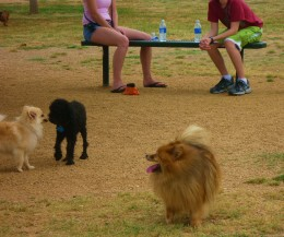 Photo of Skippy at the dog park