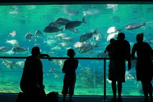 Underwater theme - Image by Gaab22 on Flickr