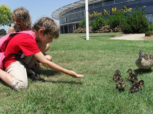 It looks like I wasn't the only one walking the children, Mommy Duck had the same idea!