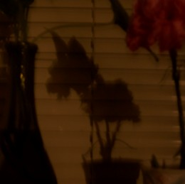 Until the lights go out, then look what appears in the shadows:)  Couldn't believe it myself.