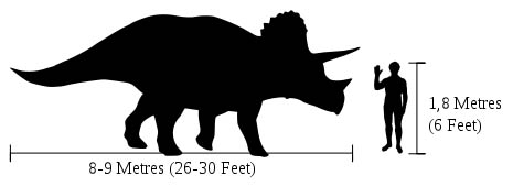 Triceratops compared to a Human