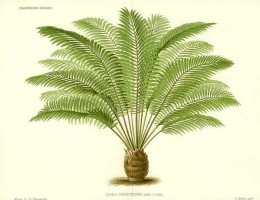 A cycad. Reckoned to be a favorite triceratops meal.