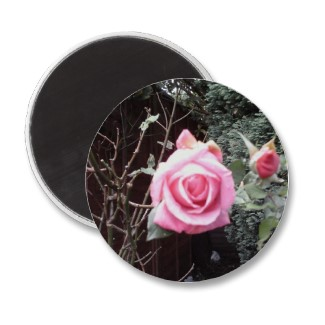 Buy A Rose Photo Magnet.