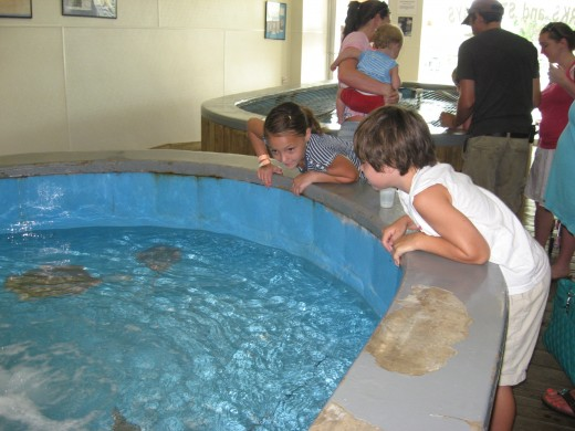 Lexi and Jonathan at one of several touch tanks.