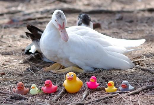 Photo: duckspeaks,Flickr