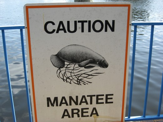 You might just see a friendly manatee!