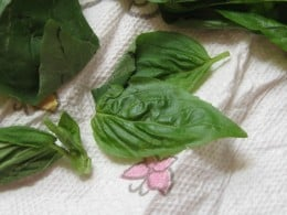 basil that is laid out in paper towels to dry